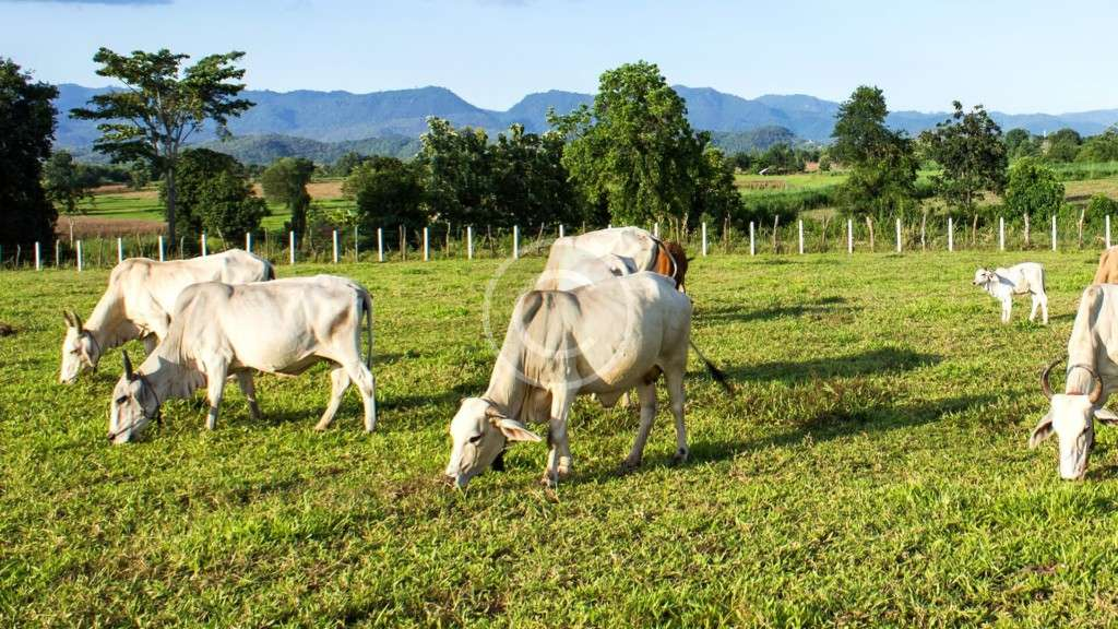 Does Ecotourism Help the Government Develop Agriculture?