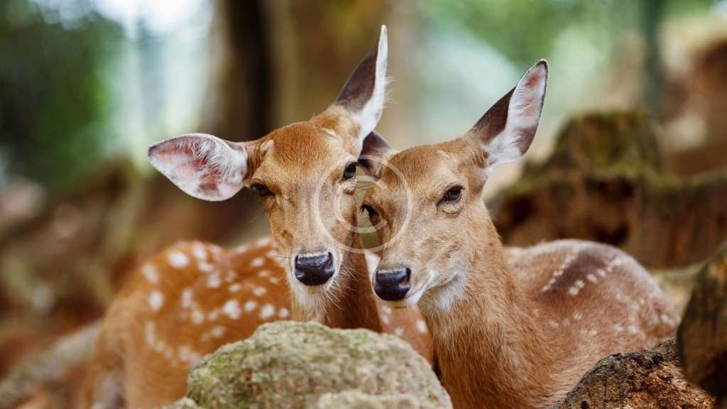 The Forests: What Does Biodiversity Mean?