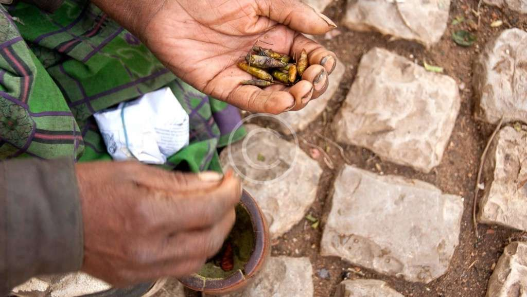 Planting New Life: Climate Change Is Complex